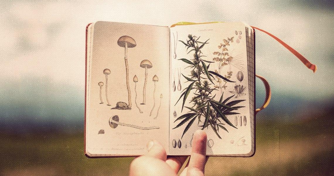 """""""L'Italia ha raggiunto un punto di non ritorno sulla legalizzazione della cannabis"""""""