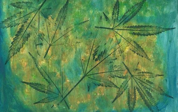 Cassazione e cannabis light, la soluzione deve essere politica