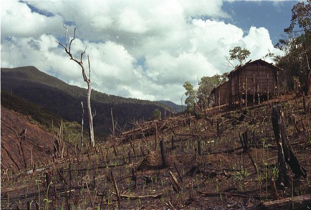 A quale prezzo? Gli attivisti che difendono l'ambiente a costo della vita
