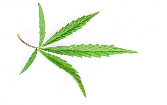 Parte il referendum sulla cannabis. Serve anche la tua firma!